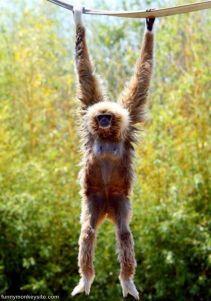 Just_Hanging_Around